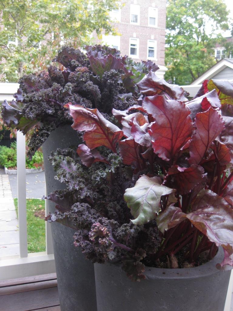choo-fall-planters-2014_19